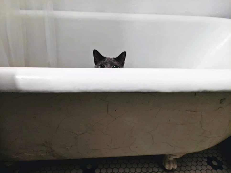 bain chat baignoire salle de bain