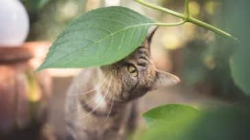chat zéro déchet