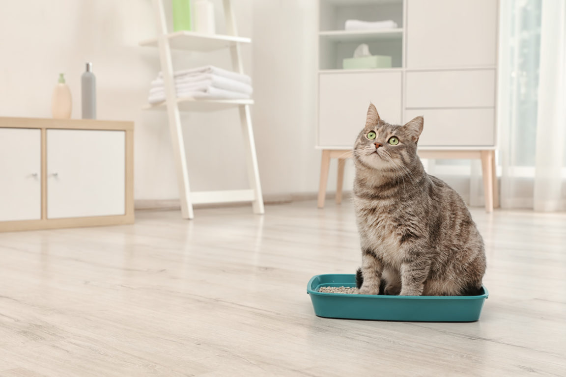chat litières compostables écologiques