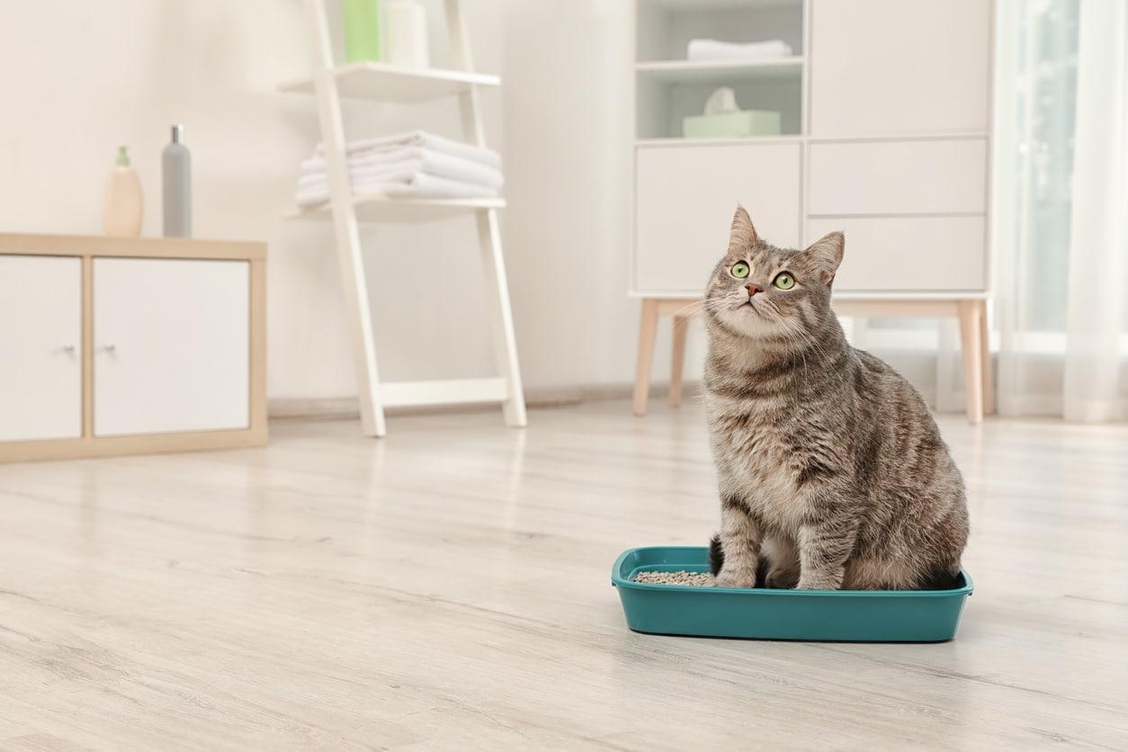 chat litière écologique
