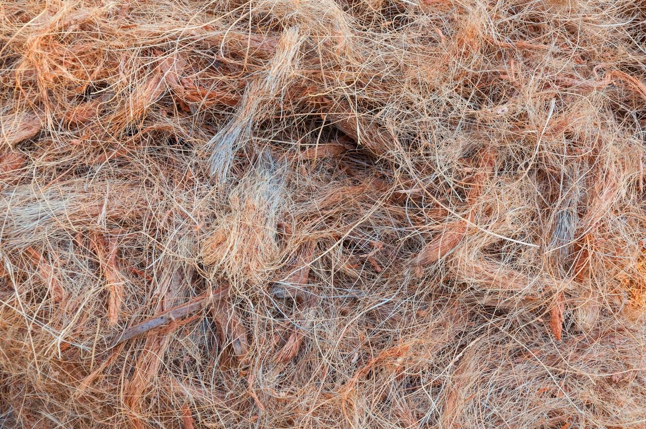 fibres de coco litières compostables
