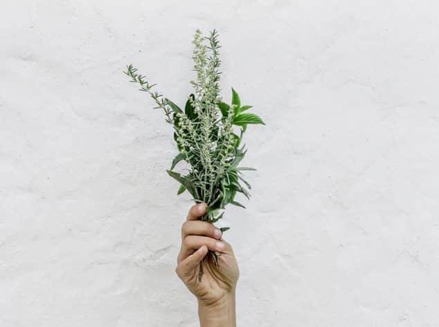 thym bouquet de plantes aromatiques zéro déchet