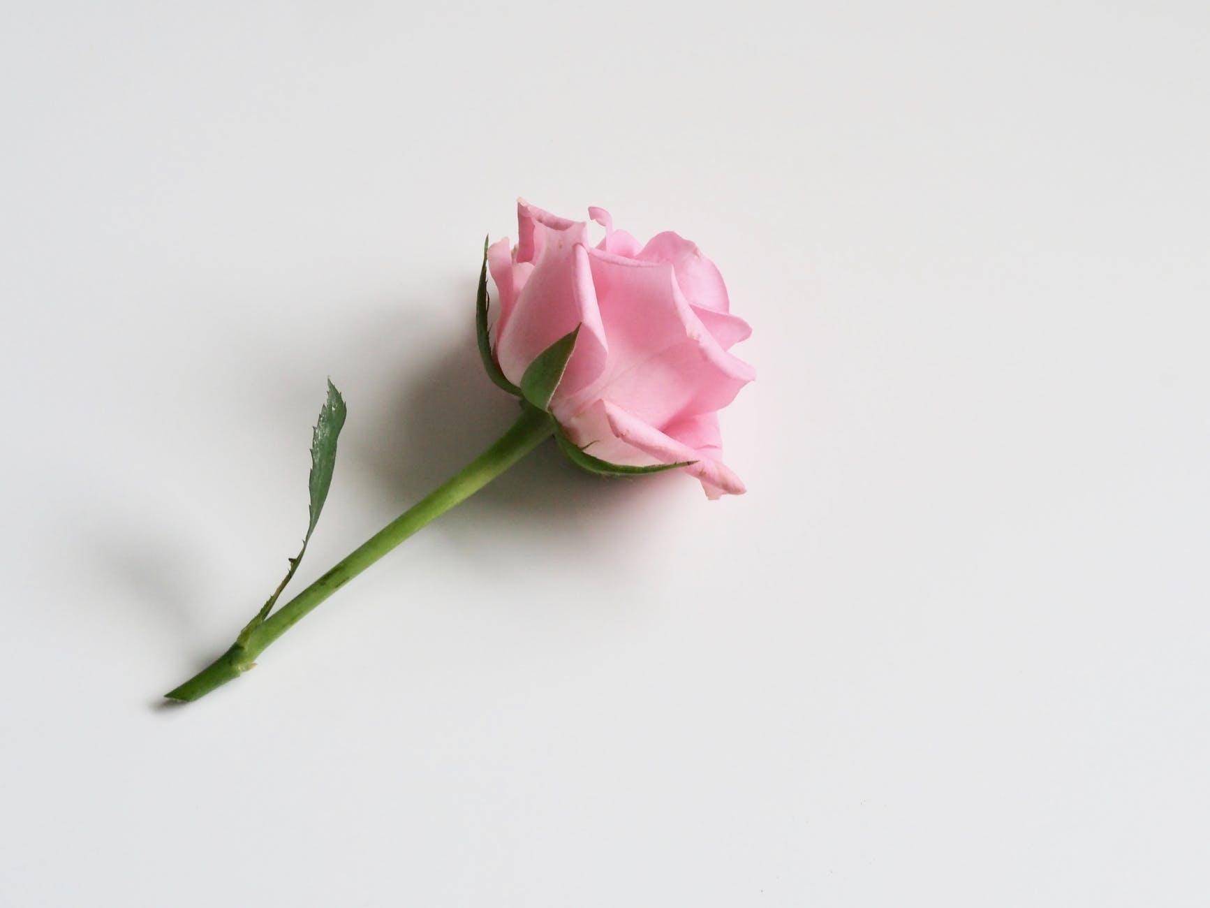 eau de rose eau florale hydrolat maison zéro déchet