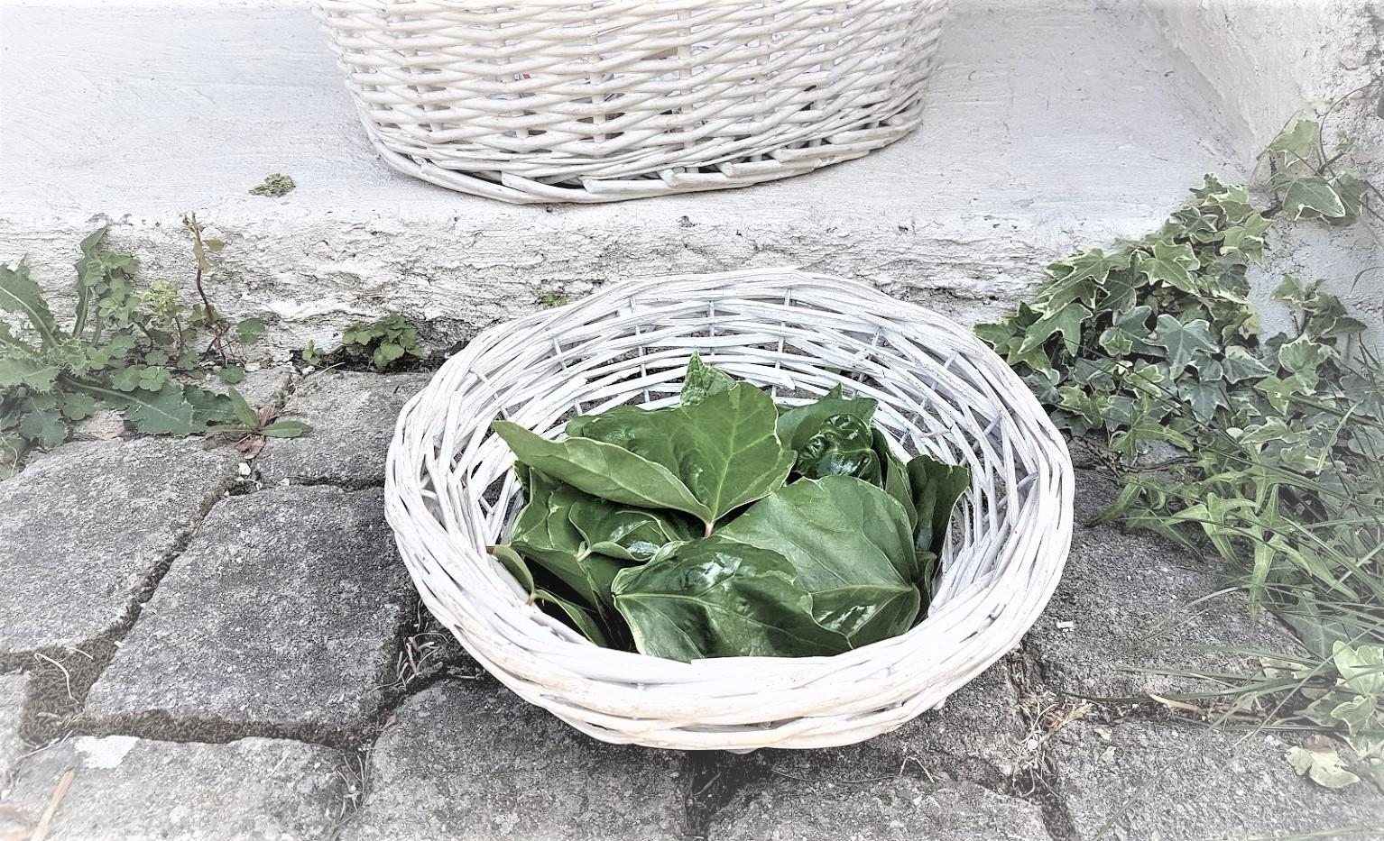 lessive au lierre feuilles panier