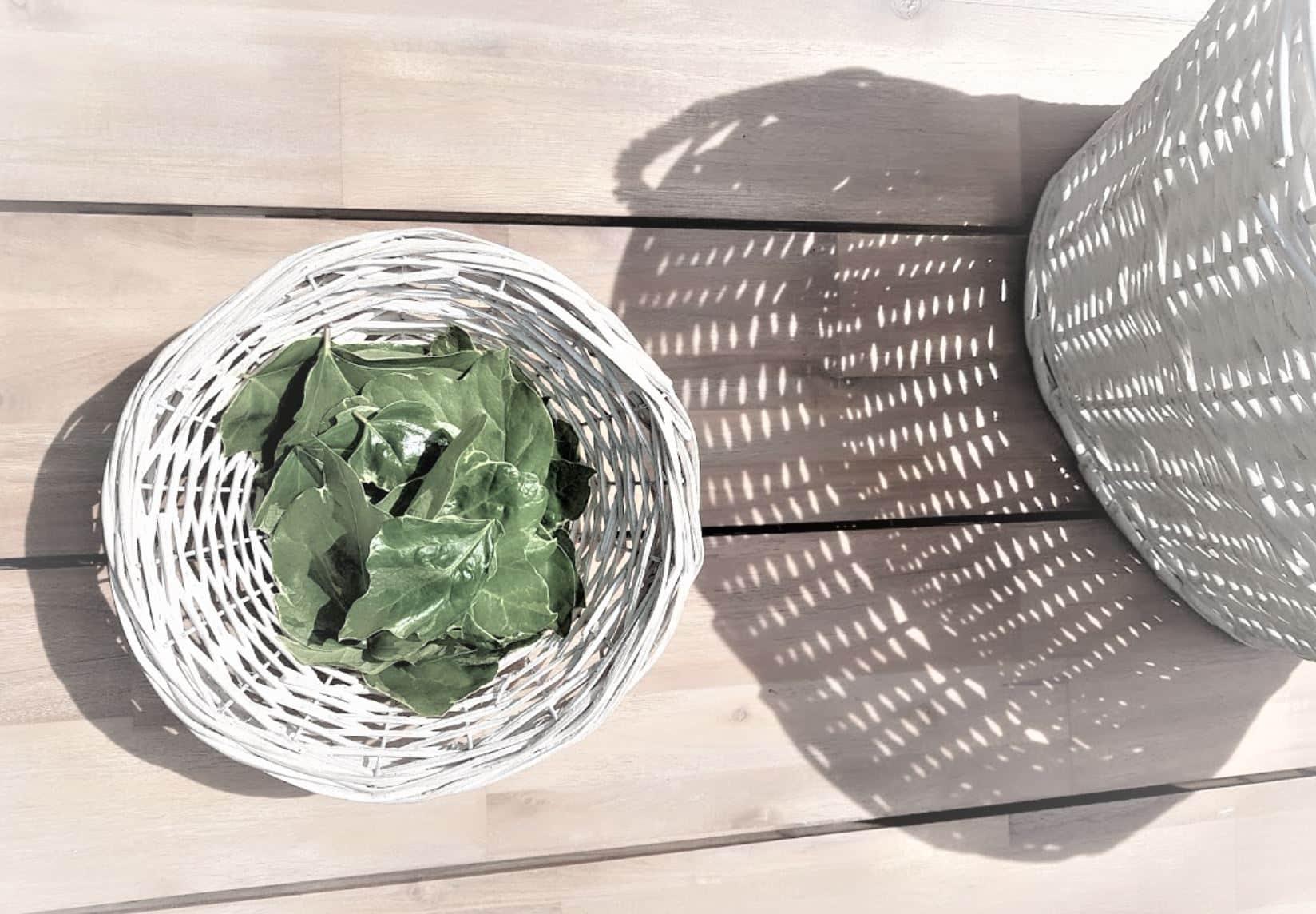 lessive au lierre feuilles recette