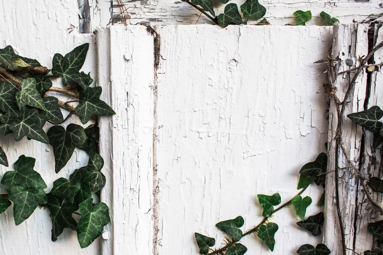 lessive aux feuilles de lierre écologique