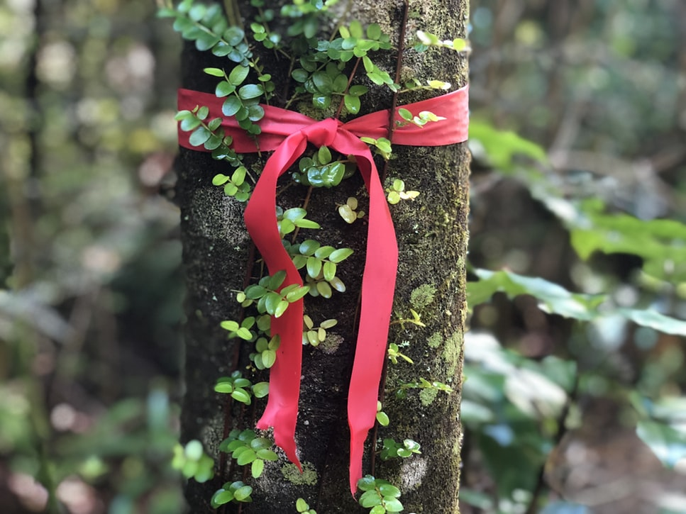 arbre enrubanné nature cadeau de Noel