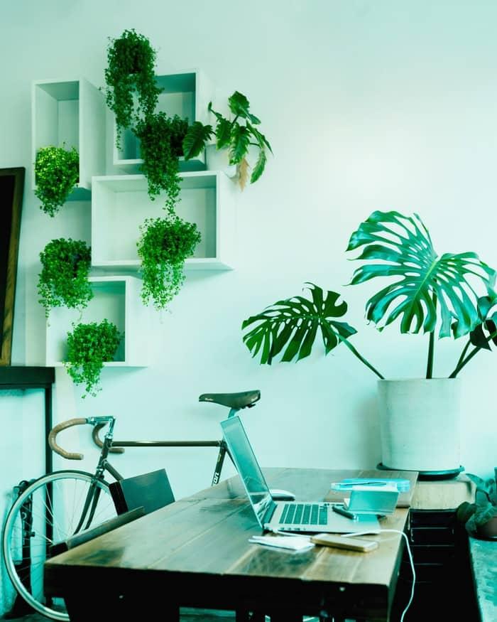 PC bureau vélo plantes ordinateur travailler