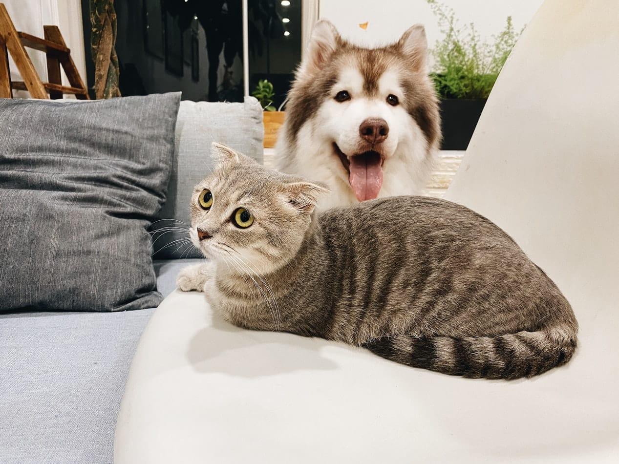 chat chien recette naturelle anti odeurs urine