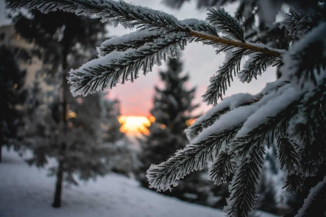 sapin de Noel aiguilles neige arbre