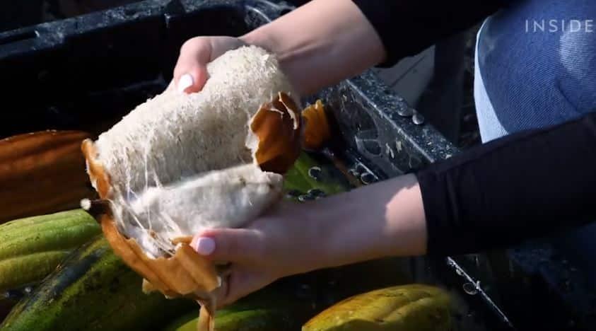 loofah luffa éponge naturelle végétale