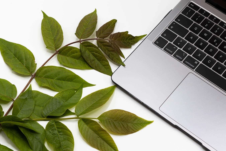 ordinateur pc feuilles vertes boîtes mails écologiques réduire pollution numérique
