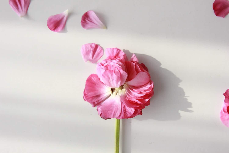 remplacer huiles essentielles pétales de rose fleurs fleur