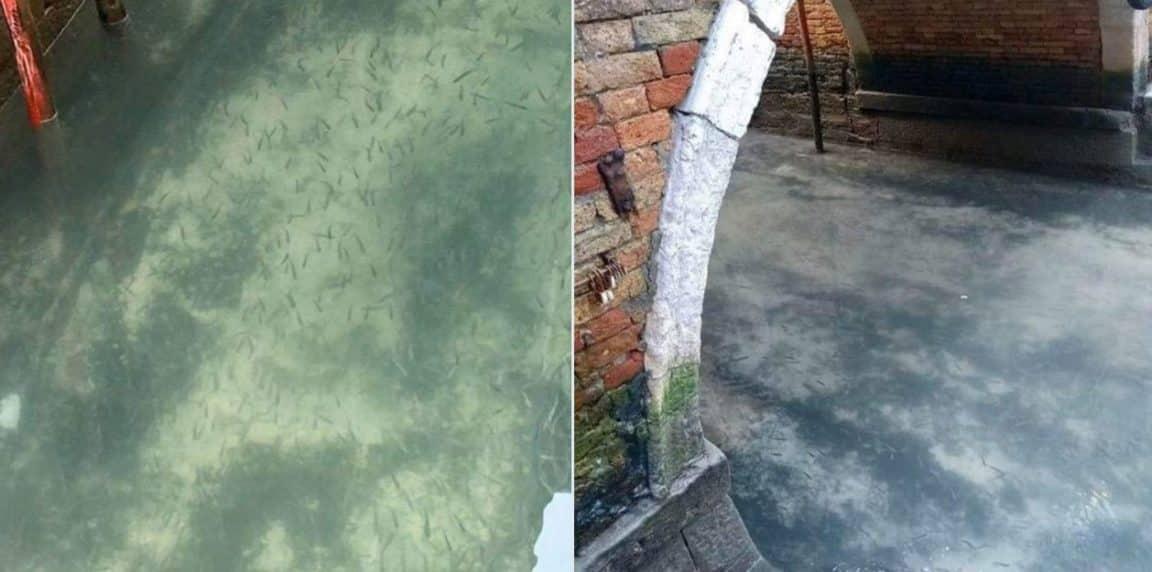 Venise eaux canaux avant apres confinement coronavirus