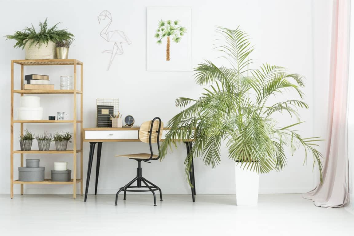 mobilier made in france fabriqué en france bureau plantes zéro déchet