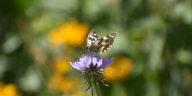 fleurs papillons