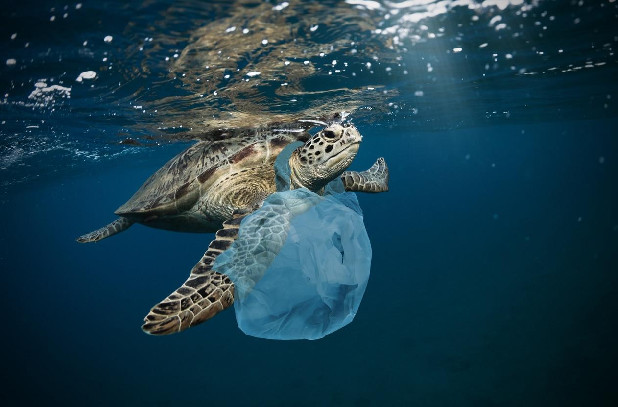 Tortue de mer avec sac plastique pollution