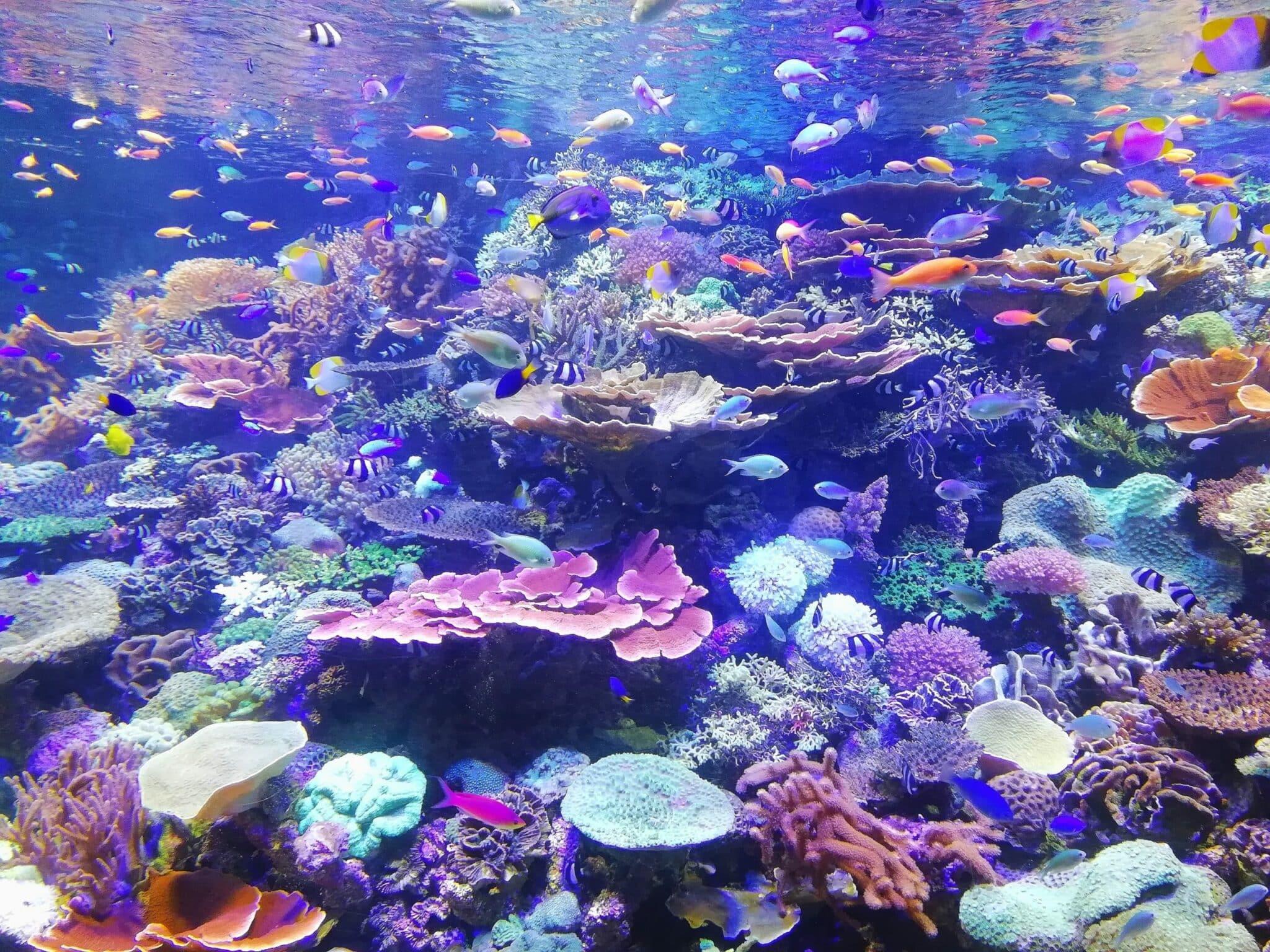 Barrière de corail crème solaire poissons danger océans environnement