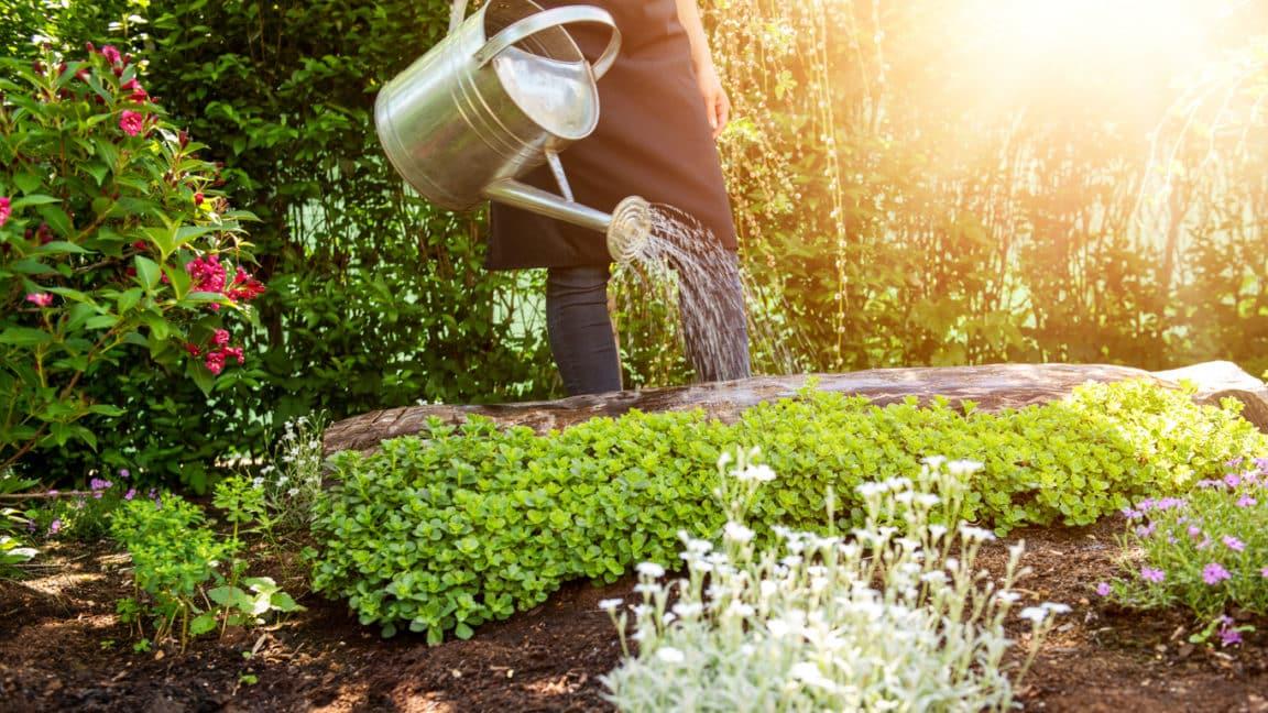 arrosoir arroser plantes jardin plantations potager protéger chaleur soleil été