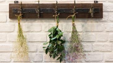 fleurs séchées plantes à faire sécher déco végétale naturelle