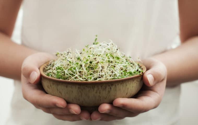 jeunes pousses graines germées bienfaits salade