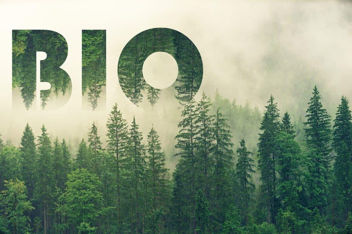 manger bio nature sapins