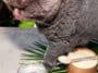 chat shampoing sec poudre bicarbonate recette naturelle zéro déchet