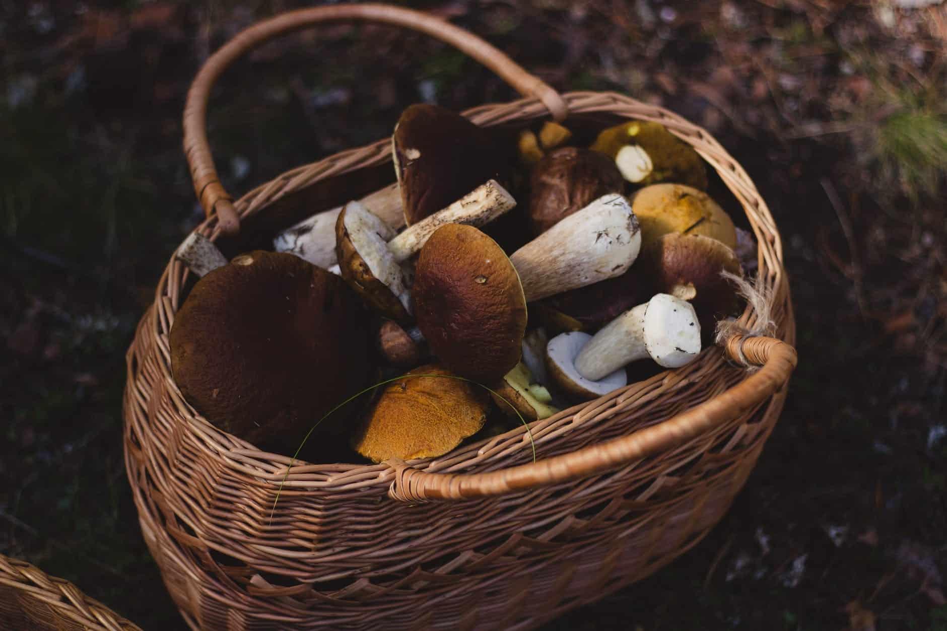 champignons paniers cueillette forêt