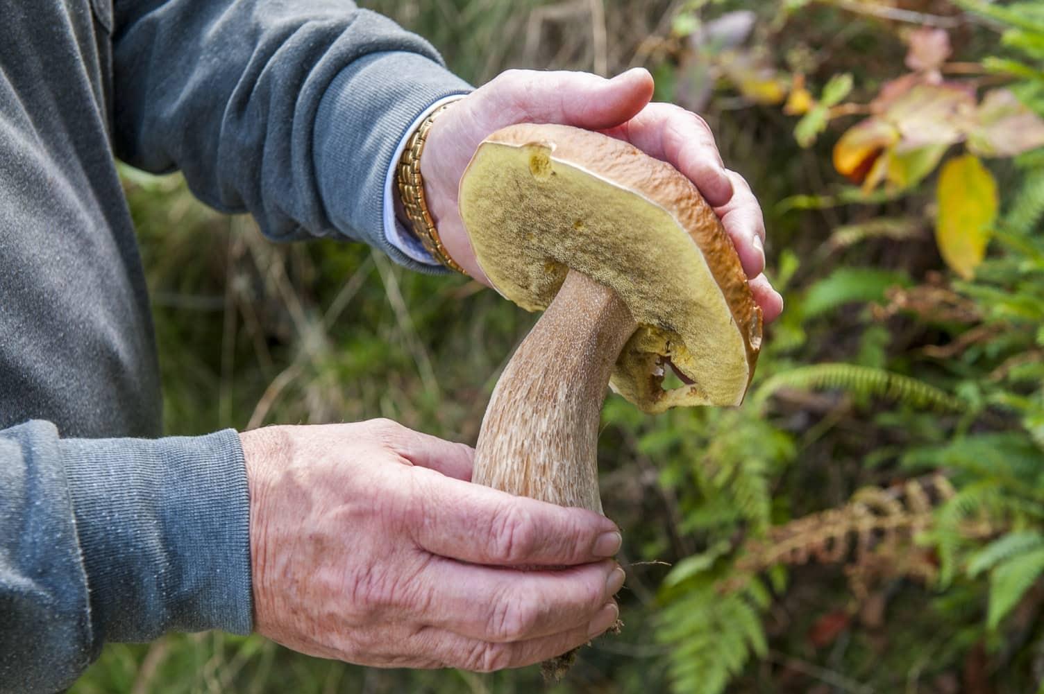reconnaitre champignons cèpes conseils