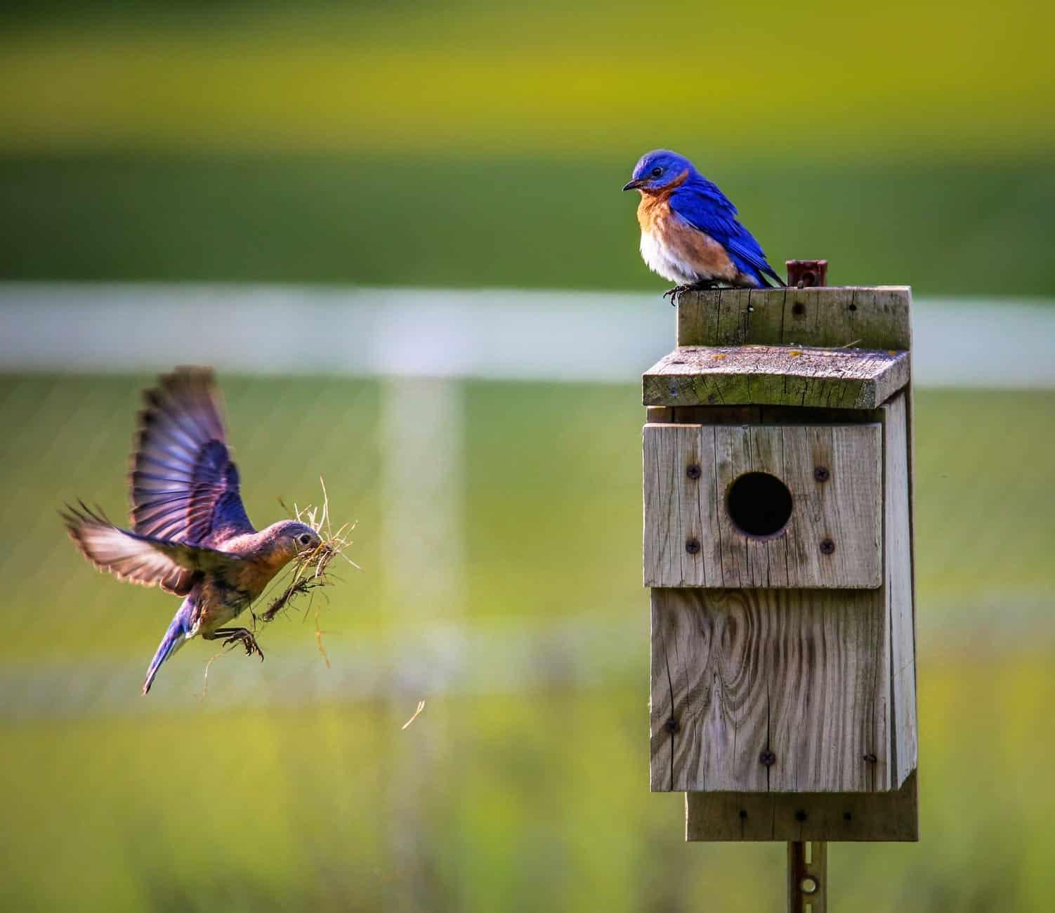 nature oiseaux niche mangeoire