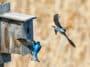 nichoir oiseaux bois nature voler fabriquer