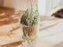 verre de thym plante aromatique