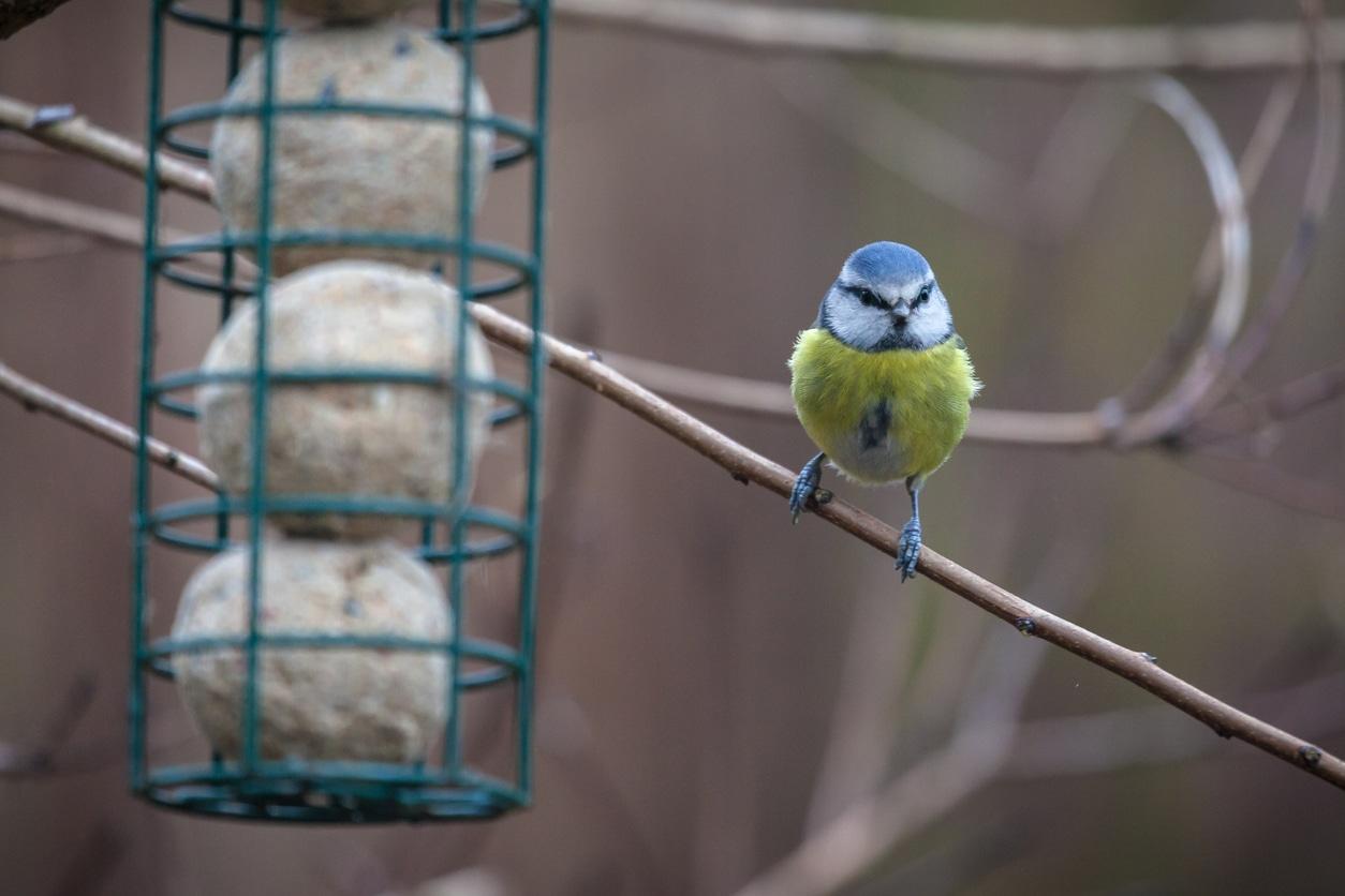 boules de graisse maison DIY oiseaux mangeoire