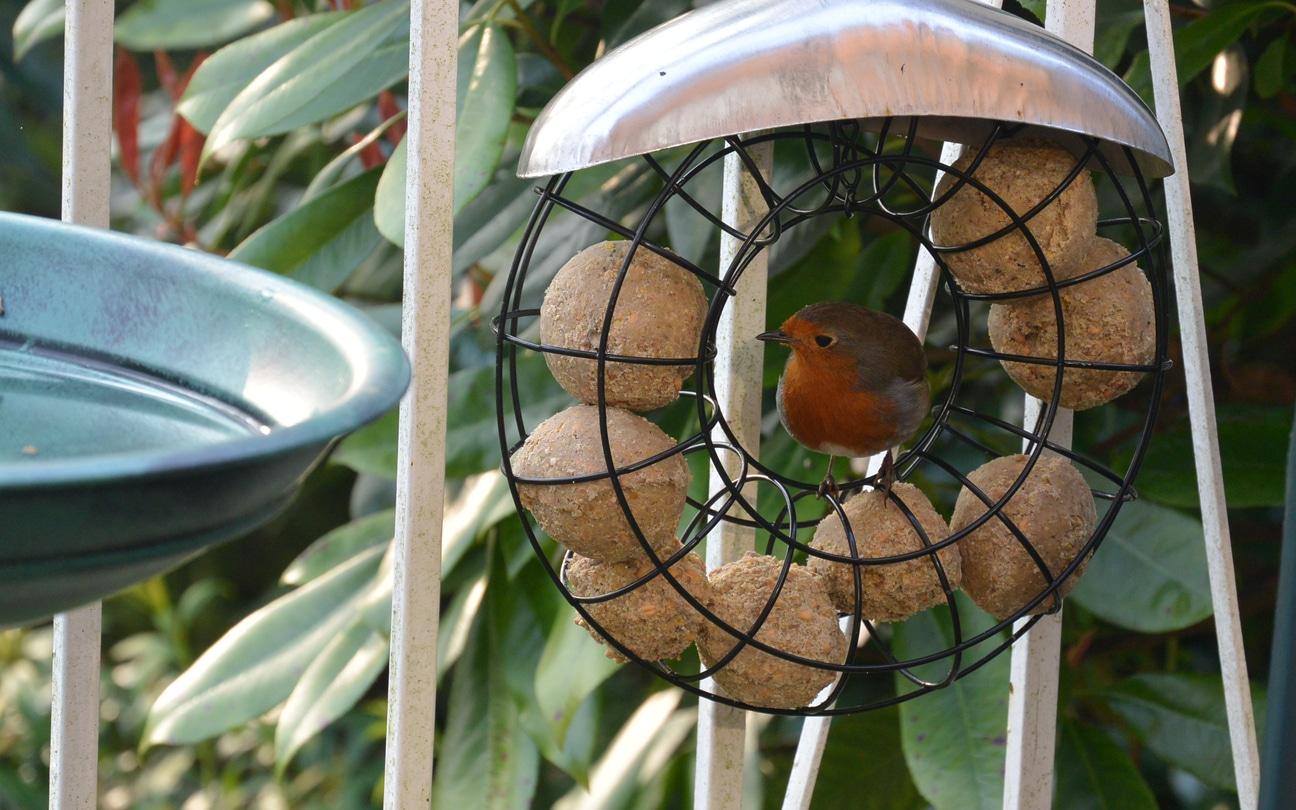 oiseau boule de graisse rouge gorge maison DIY mangeoire