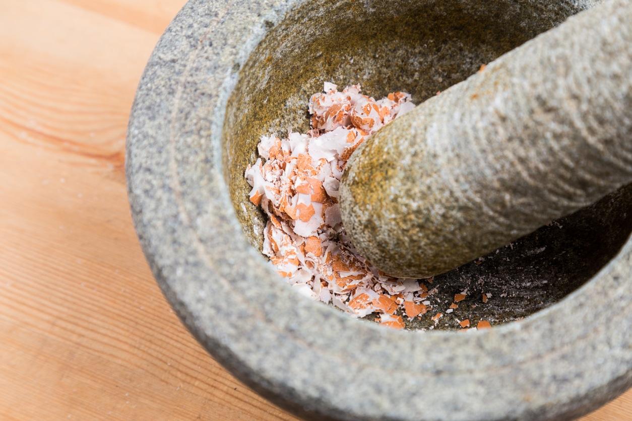 mortier cuisine coquilles oeufs broyer