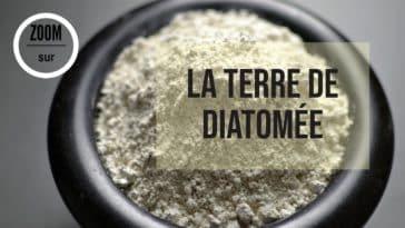 terre de diatomée utilisations vertus poudre insecticide naturel