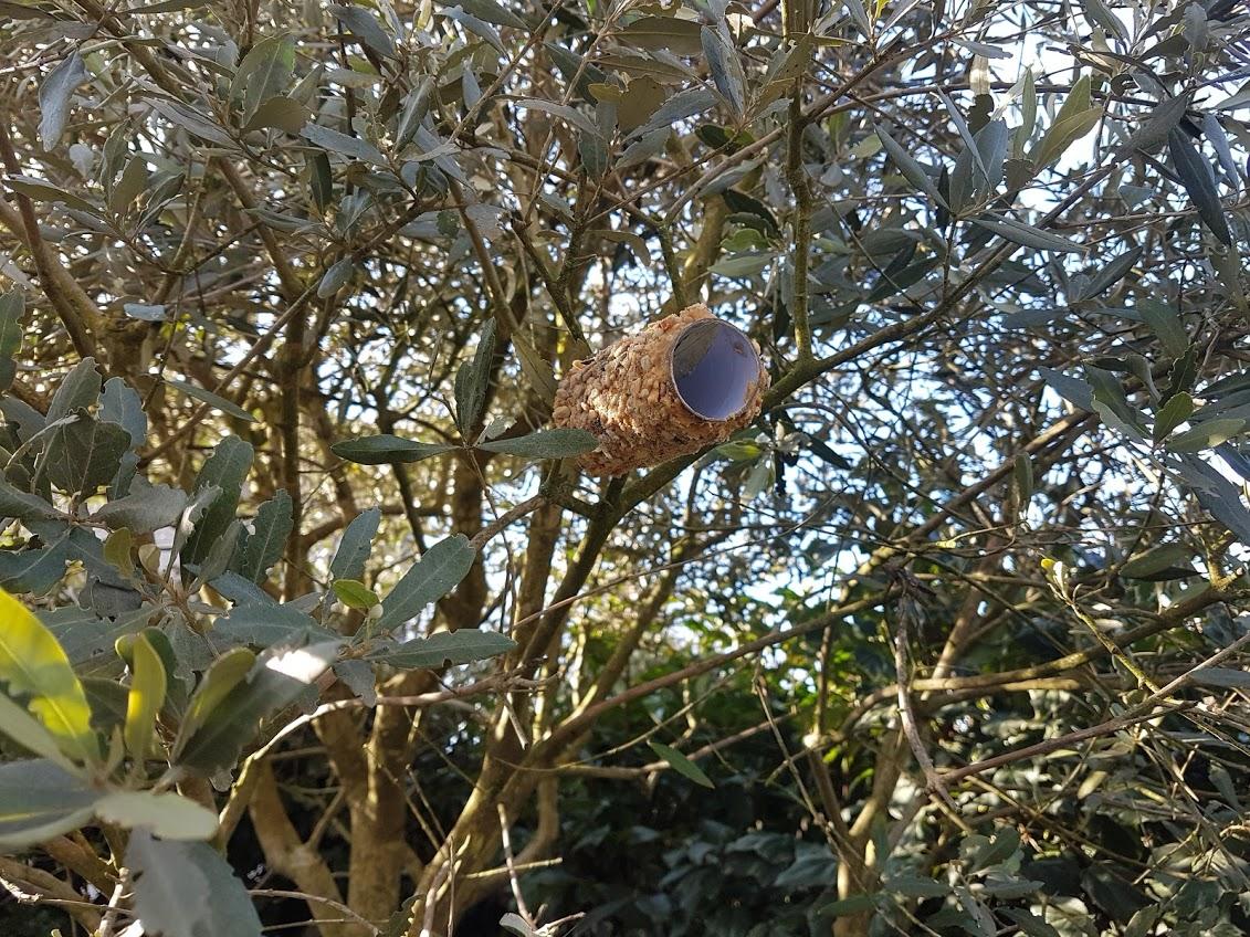 boule cylindre nourriture oiseaux