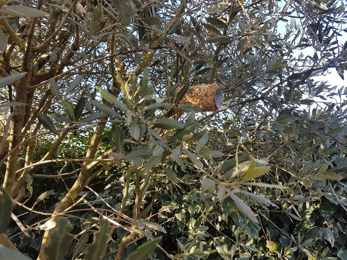 rouleau graines oiseaux nourriture arbre jardin