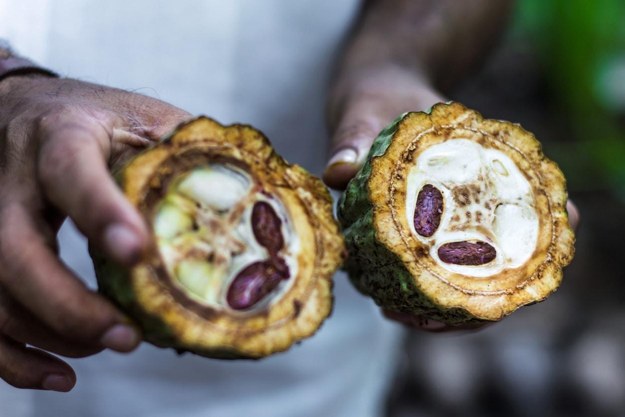fèves de cacao chocolat fruits mains