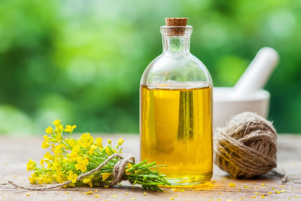 flacon bouteille huile de colza bienfaits vertus plante fleurs