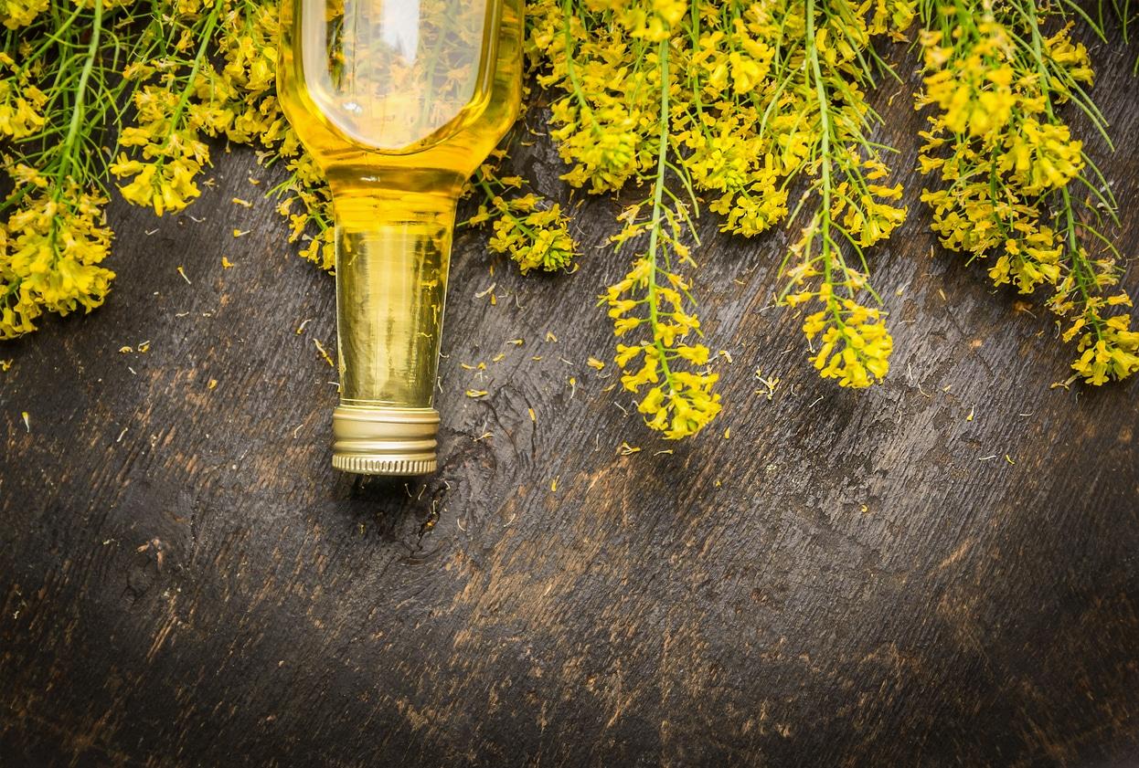 huile végétale de colza bienfaits vertus plante fleurs jaunes