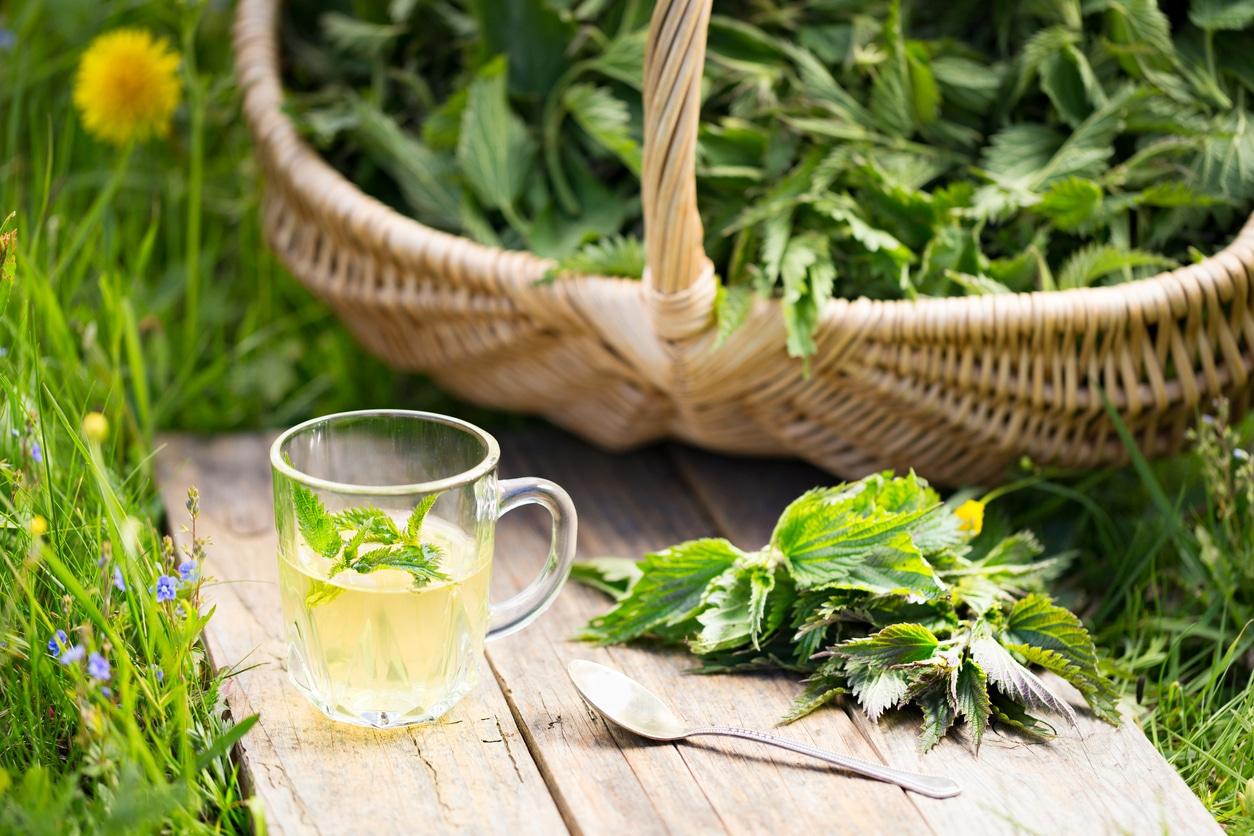 thé à l'ortie tisane panier osier jardin