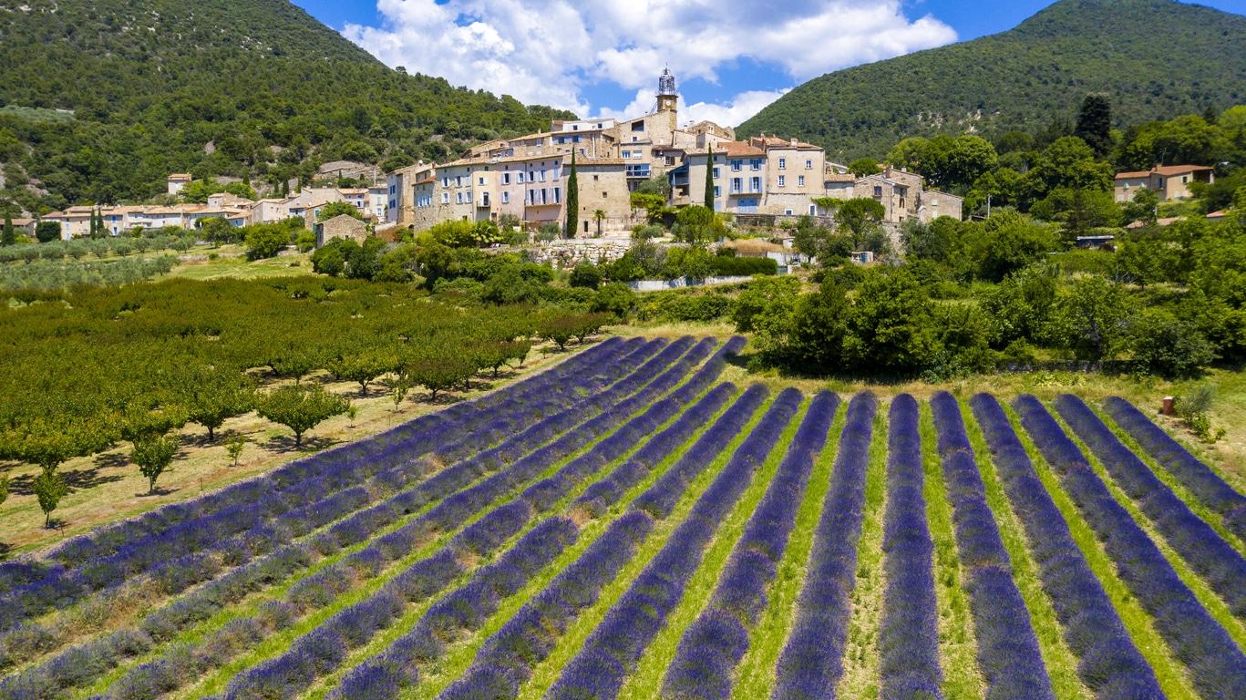 Provence France champs de lavande drôme