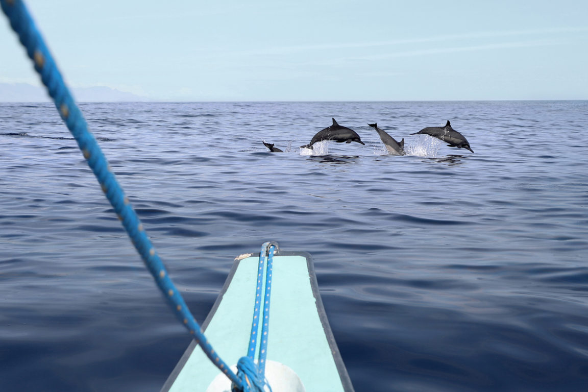 dauphins voilier bateau mer océan