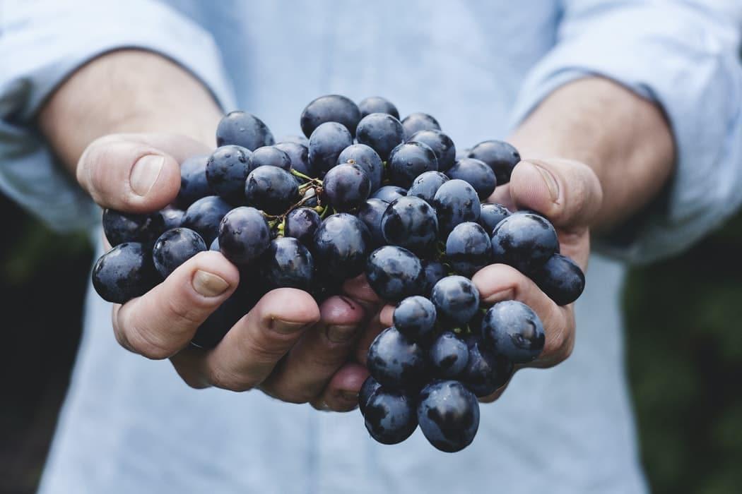grappe de raisin pesticides fruit raisins