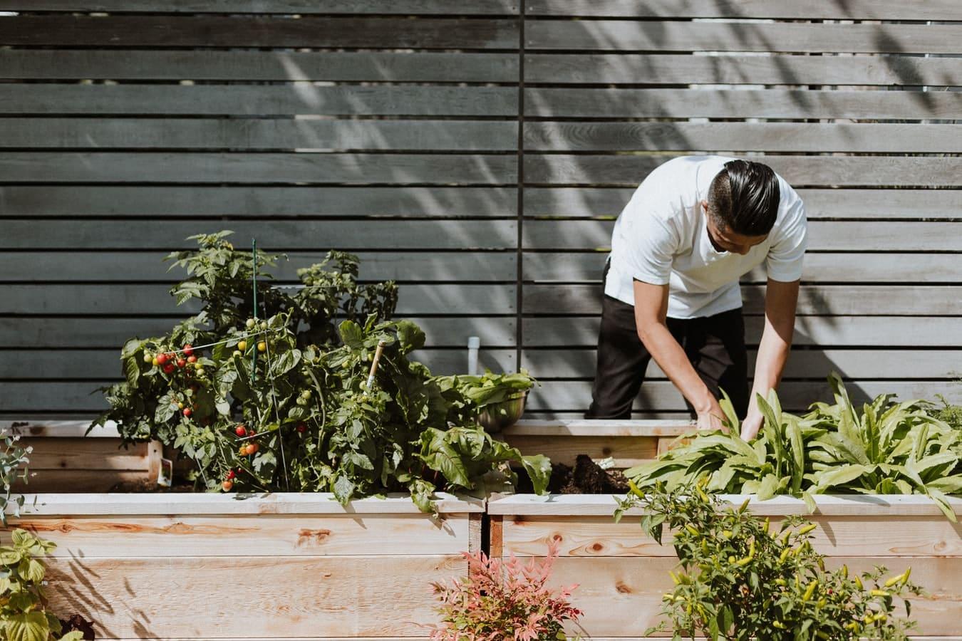 jardiner jardinage écolo zéro déchet