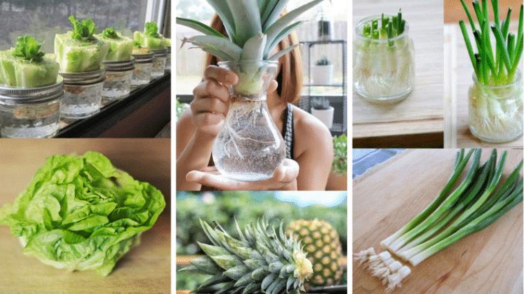 légumes fruits repoussent tout seuls infini