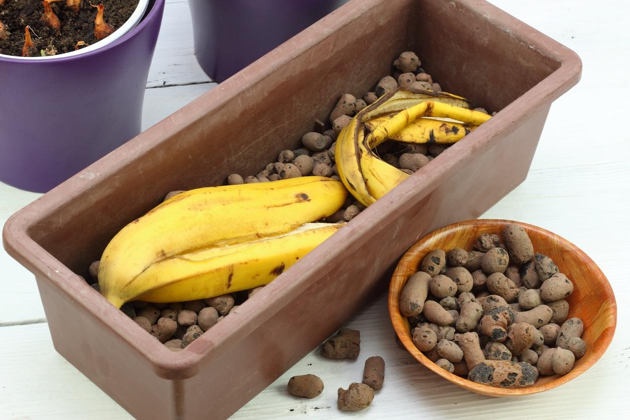 recycler réutiliser peaux de banane jardin plantes astuces zéro déchet