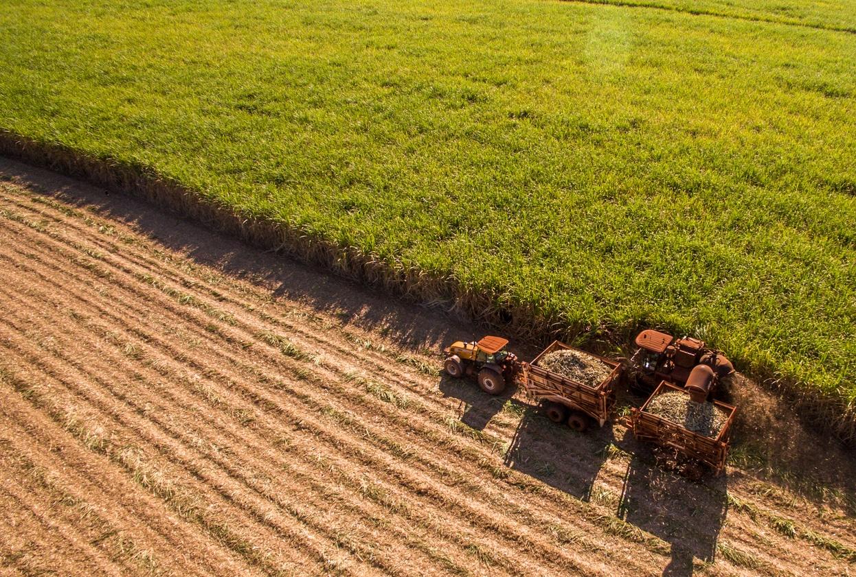 canne à sucre industrie champs déforestation