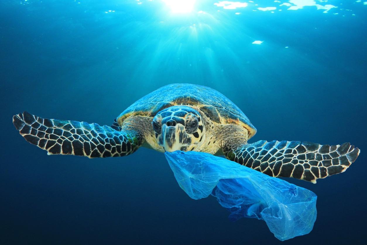 tortue de mer océans protéger plastique sac déchet pollution marine
